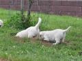 2011.07.01-Portee-Briny-Smirre-45_1