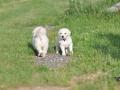 Portee-Briny-Smirre-01.07.2011-2