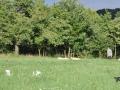 Portee-Briny-Smirre-01.07.2011-4