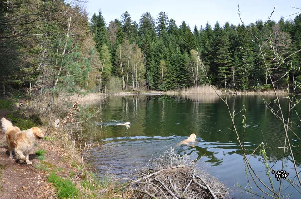 Photos-sorite-lac-de-Pierre-Percee-06.04.2011-12