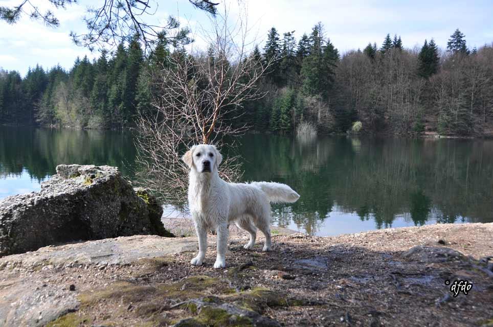 Photos-sorite-lac-de-Pierre-Percee-06.04.2011-26