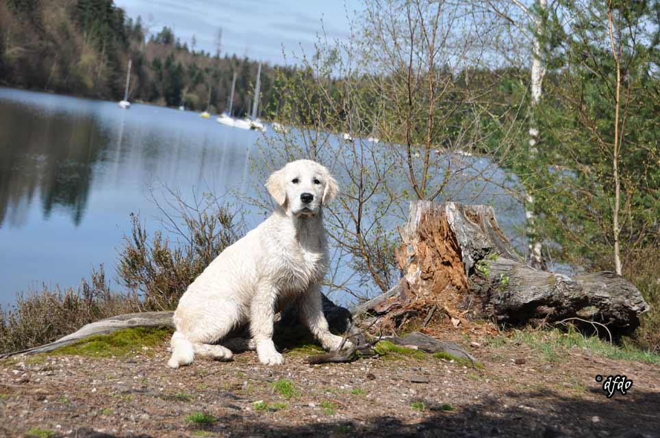 Photos-sorite-lac-de-Pierre-Percee-06.04.2011-28