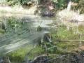Photos-sorite-lac-de-Pierre-Percee-06.04.2011-5