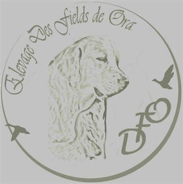 Elevage des Fields de Ora – Golden Retriever